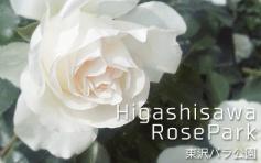 日本全国のバラ観光地上位を誇る!村山市の東沢バラ公園