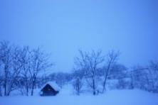 ojima_snow