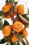 オラいの柿食う会2014_実りの秋